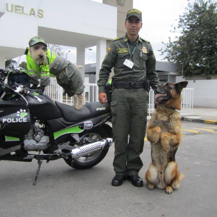 El perrito policía de Bogotá