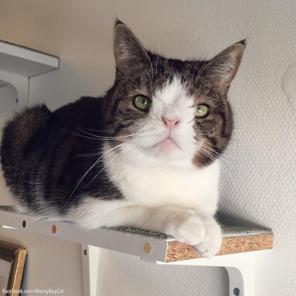 Monty, gato con síndrome de down