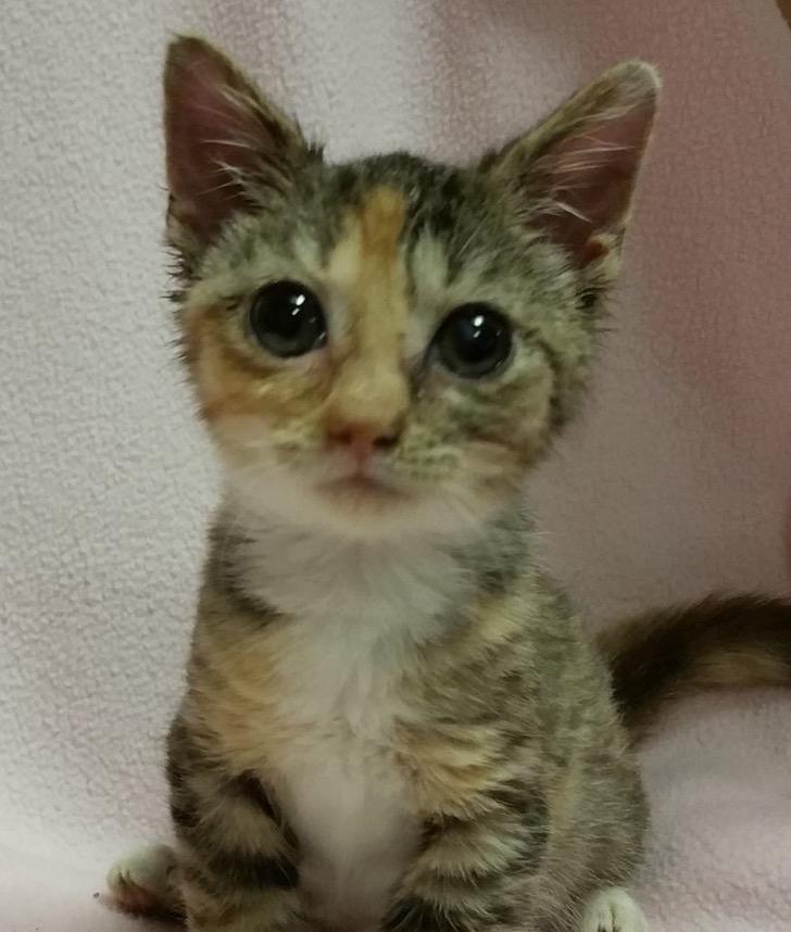 La gatita más pequeña del mundo
