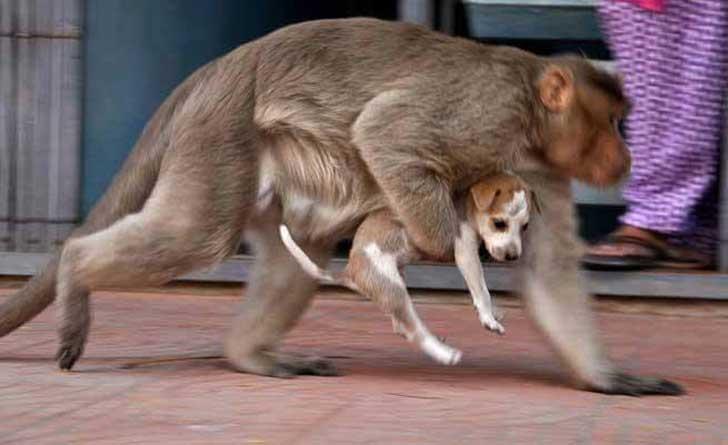 Mono rescata a un cachorro