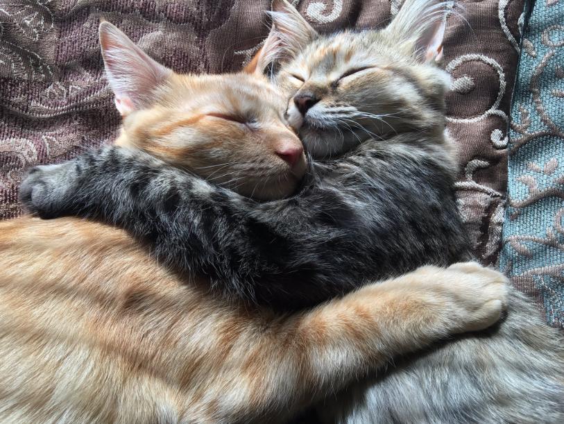 Adorable pareja de gatitos
