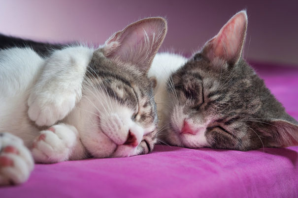 Parejas de gatos cariñosos