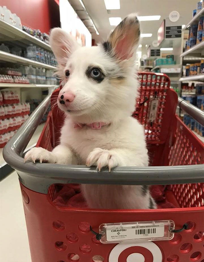 Perro feliz en el supermercado