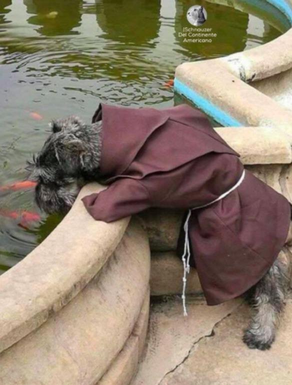 Fray Bigotón, el perro fraile