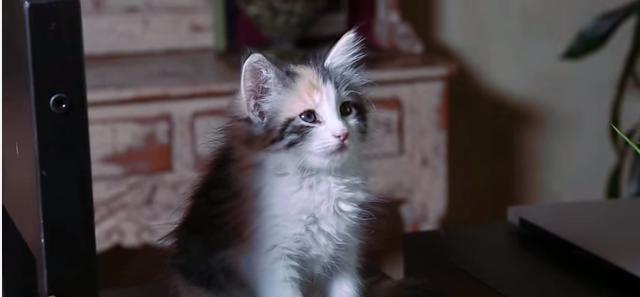 La versión más felina y adorable de '50 sombras de Grey'