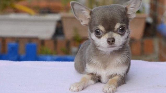 ¡Conoce a Bibity Bobity Boo, el perro más pequeño de Reino Unido!