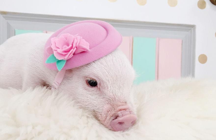 Las mejores fotos de animales con sombreros