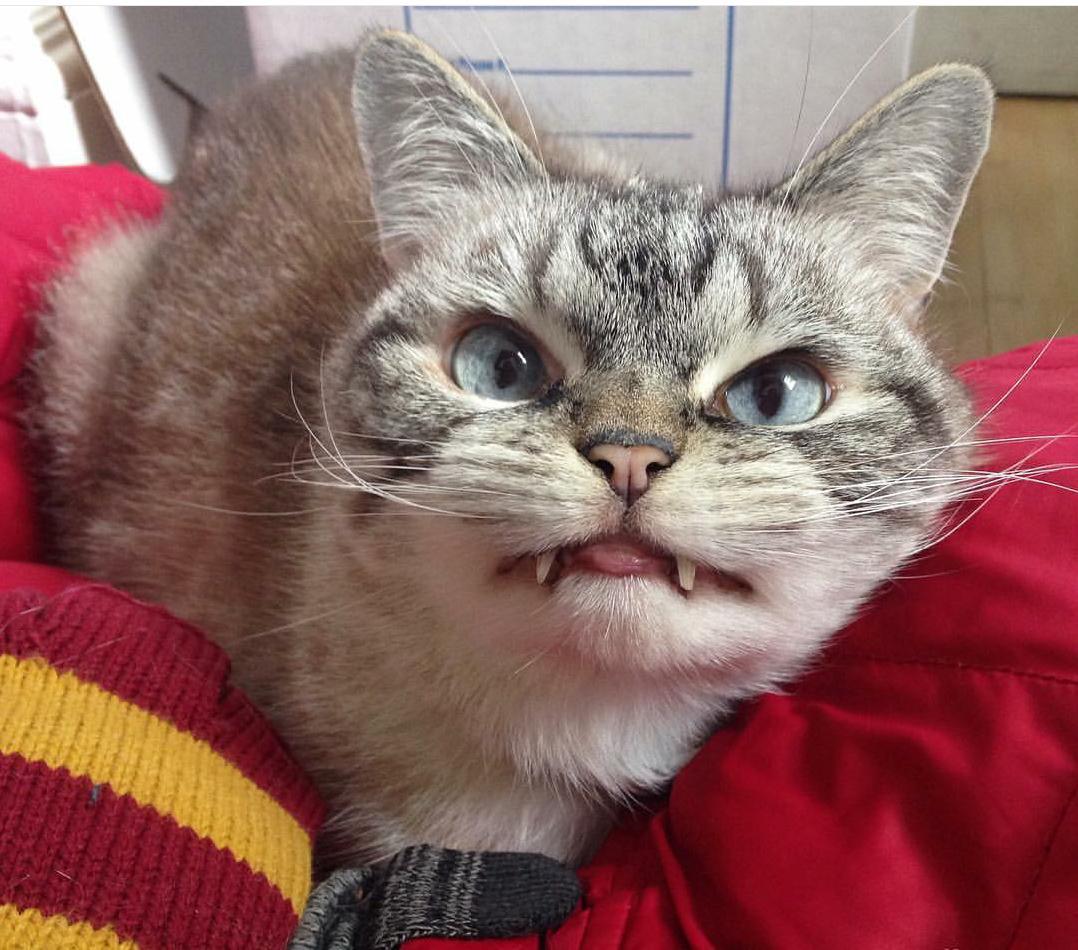 ¡Conoce a Loki, el gato vampiro!
