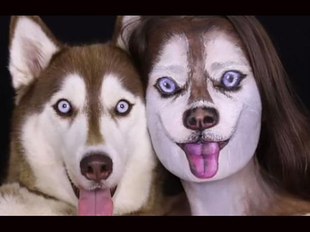 El vídeo para convertirte en un husky siberiano