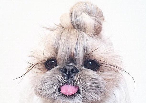 Los 10 perritos con moño que te van a enamorar