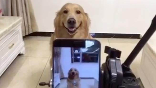 El perro que sonríe cuando le sacan fotos