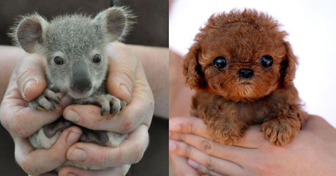 Estos 20 bebés de animales son lo más cute que verás hoy