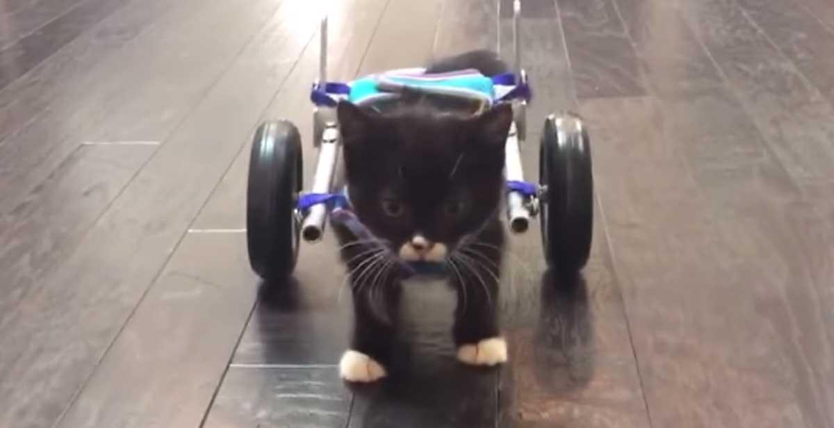 Dos estudiantes construyen una silla de ruedas para un gatito minusválido