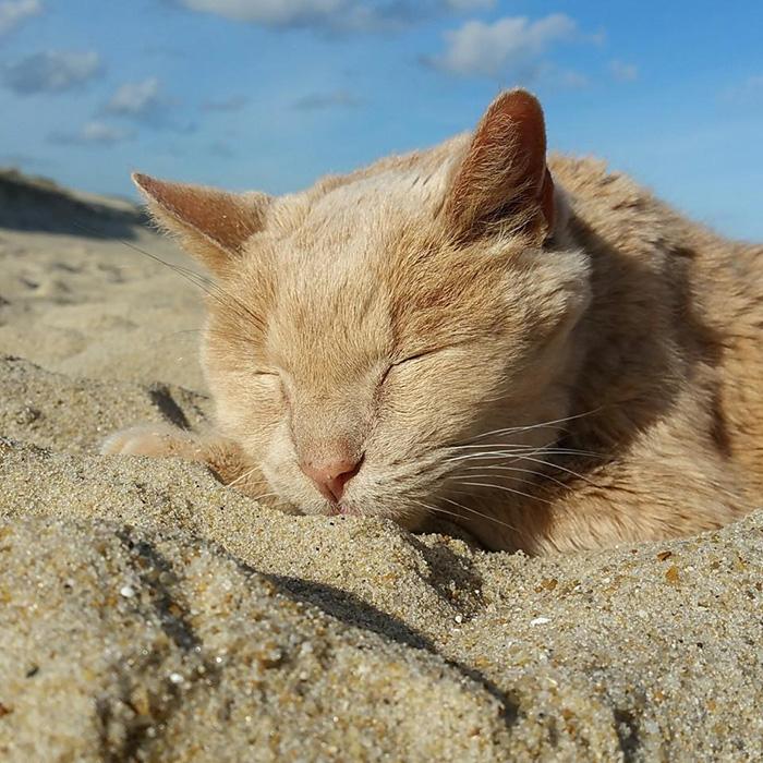 Rescató a un gato a punto de morir para hacerlo feliz en sus últimos días