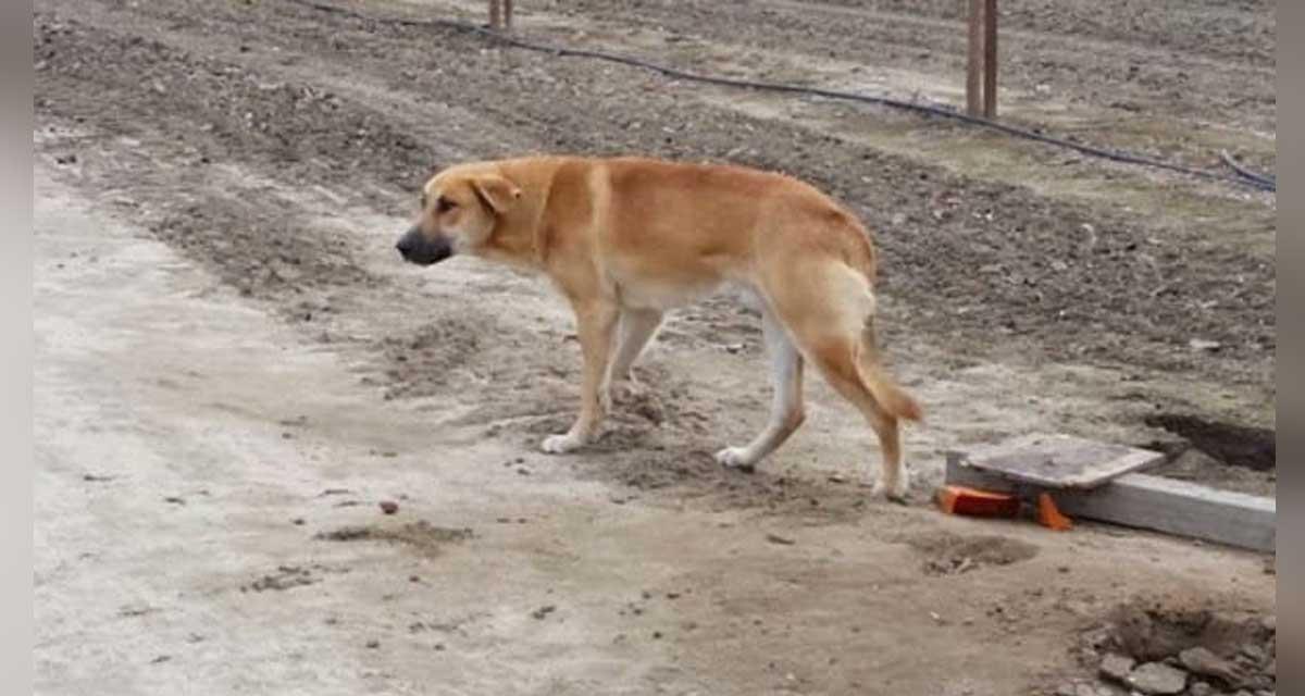 carta a quien abandono a este perro