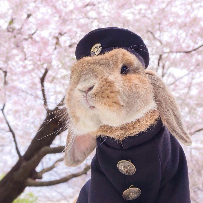 Conoce a PuiPui, el conejo más elegante del mundo