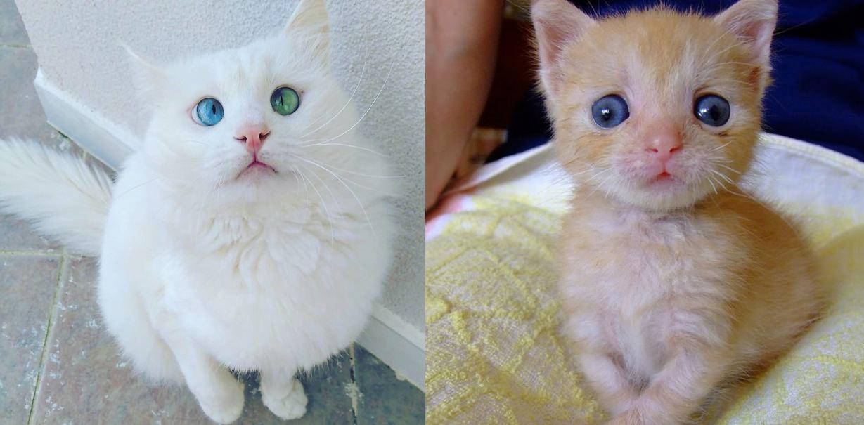 12 gatitos bizcos que demuestran que no hace falta ser perfecto para ser adorable