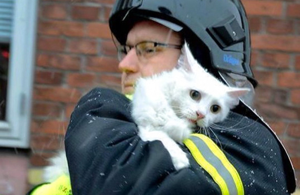 Bomberos que arriesgaron su vida para salvar animales