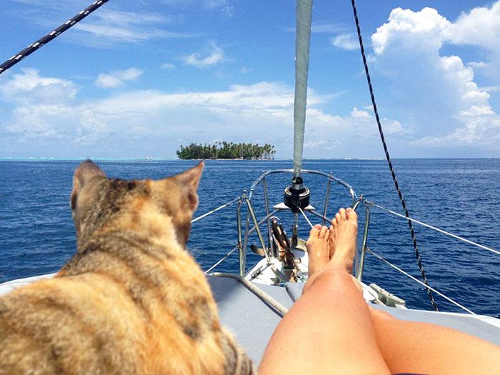 deja su trabajo para navegar con un gato