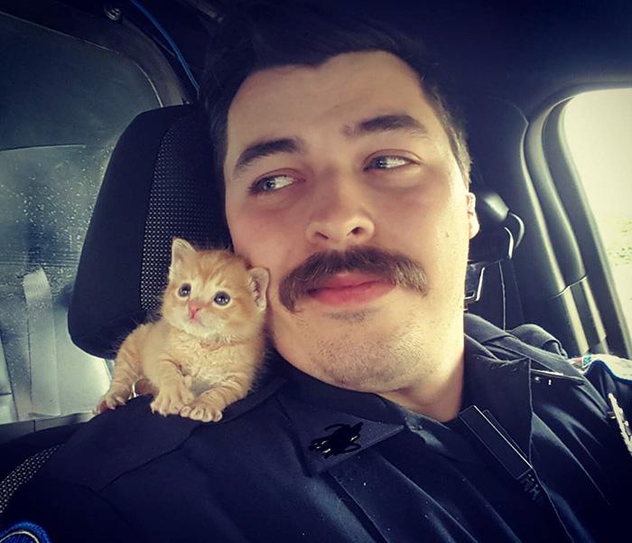 Este duro policía encontró a su compañero de trabajo perfecto: un gatito