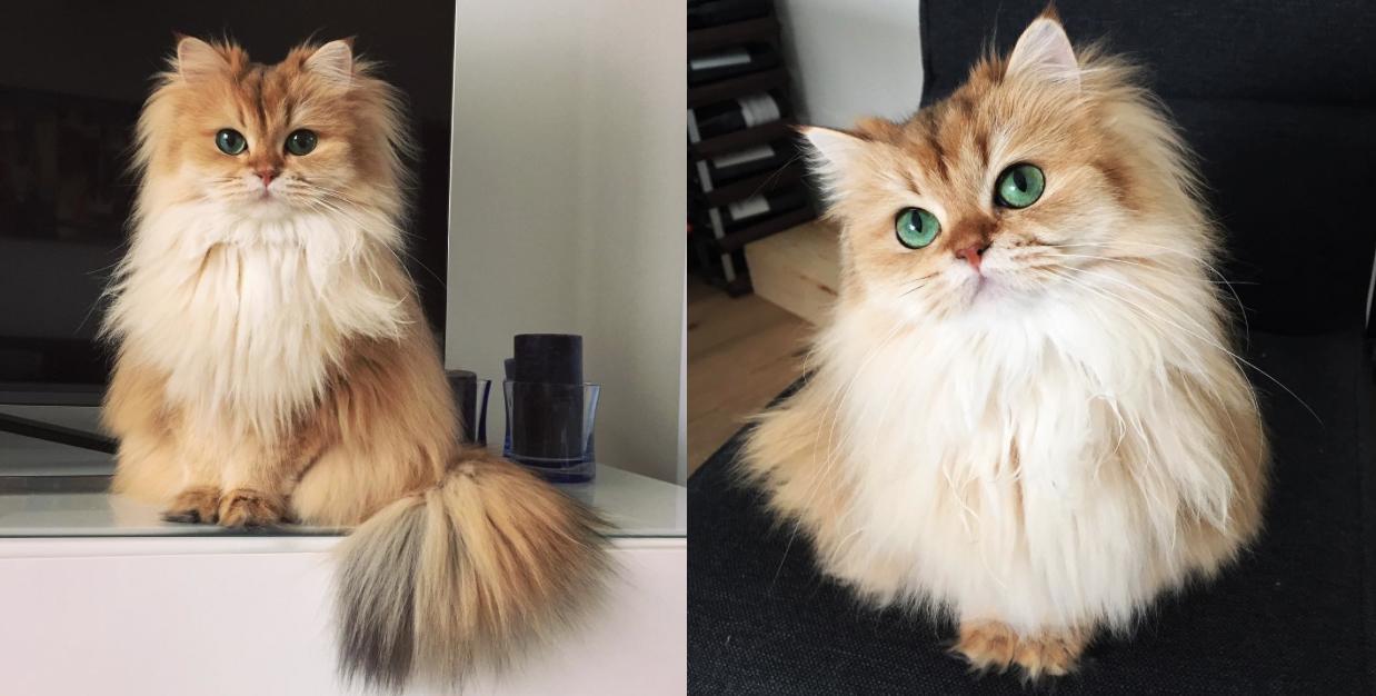 Se llama Smoothie y es la gata más fotogénica del mundo