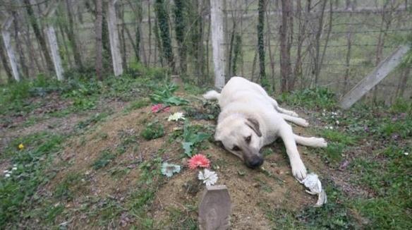 Este perro lleva dos años visitando a diario la tumba de su dueño