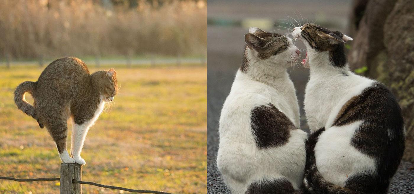 Este fotógrafo da a los gatos callejeros el protagonismo que se merecen
