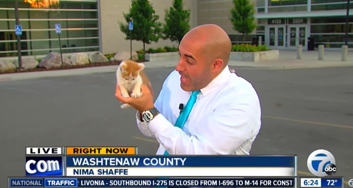 Esta gatita fue rescatada tras interrumpir en las noticias en directo