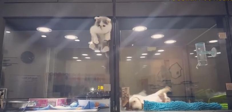 Este gato escapando para reunirse con su amigo ha conmovido a internet