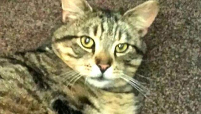 Este gato ha vuelto a casa después de 3 años perdido