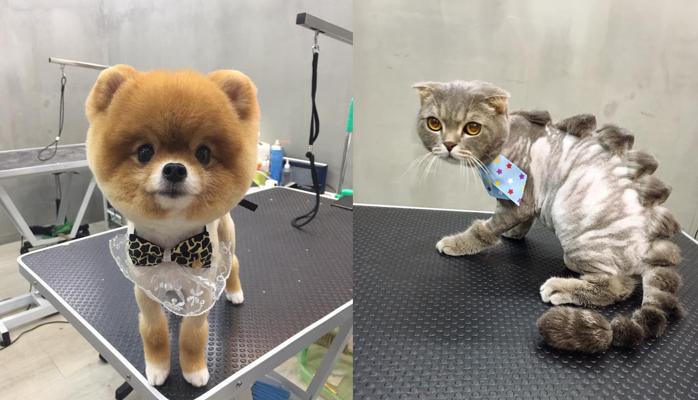 ¡Esta es la peluquería de mascotas más loca del mundo!