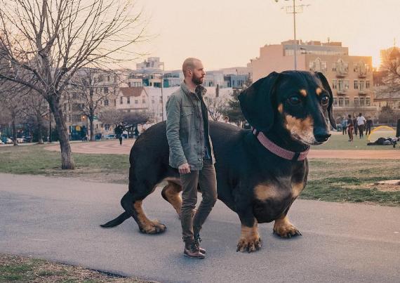 Su perrita era tan importante para él, que decidió hacerla tan grande como él la veía