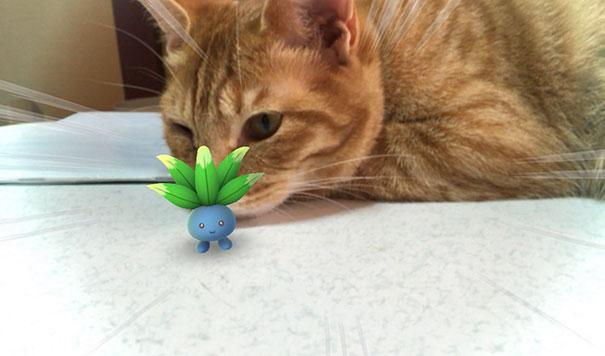 Estas fotos son la prueba de que las mascotas pueden ver a los Pokémons