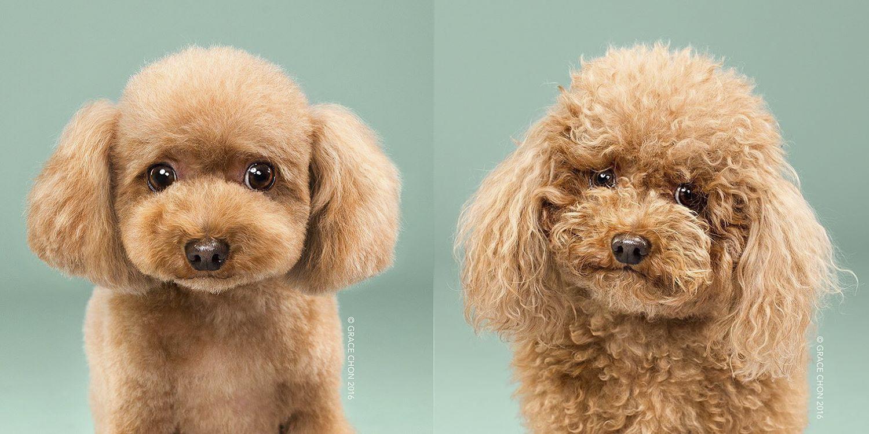 Las adorables fotos de perros antes y después de cortarse el pelo