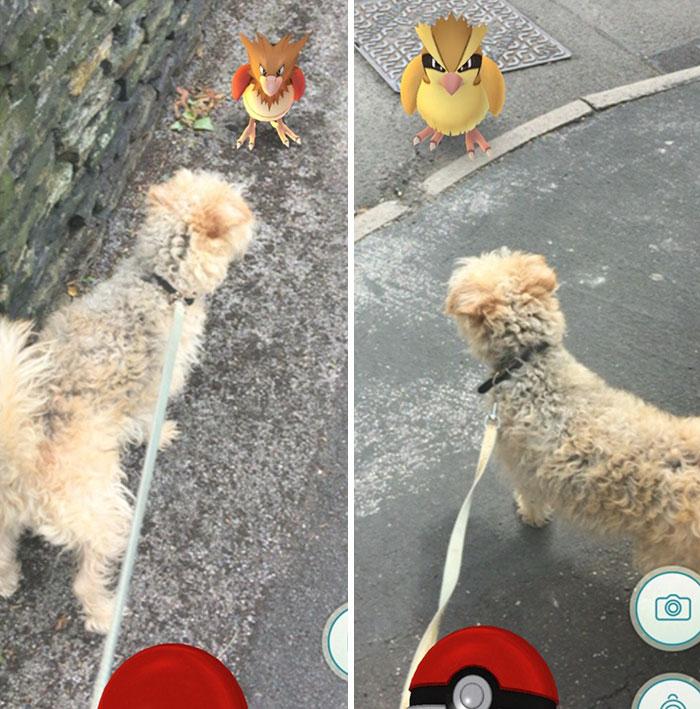 Un refugio pide a los jugadores de Pokemon Go que se lleven a sus perros a cazar Pokemons