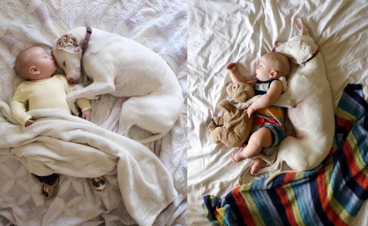 Esta fotógrafa captura los momentos más tiernos de su bebé y sus mascotas