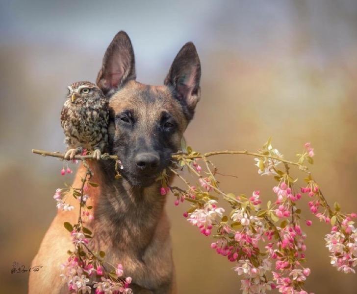 Este perro y este buho tienen la amistad más especial