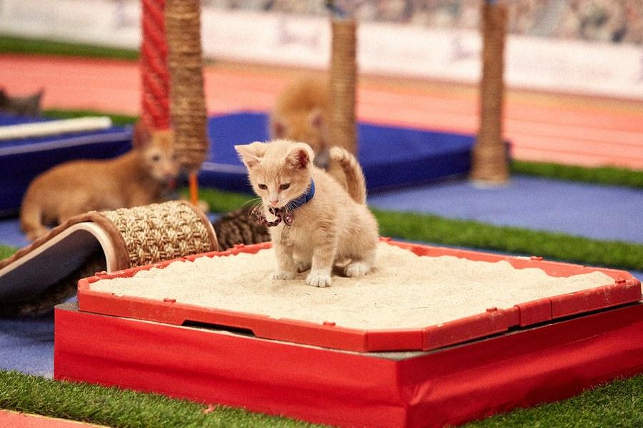 Los mejores momentos de los Juegos Olímpicos para Gatitos