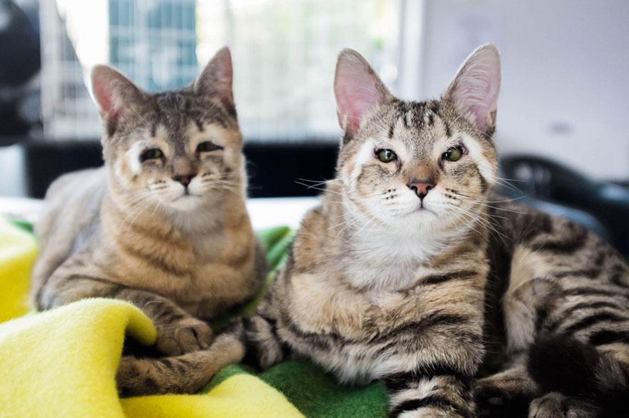 Estos gatos callejeros nacieron sin párpados