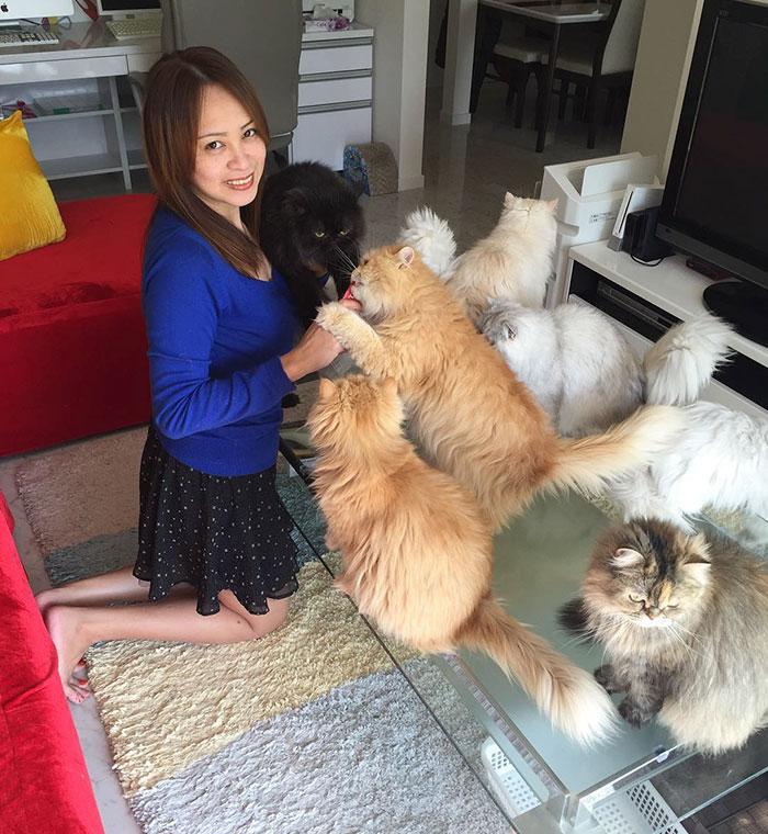 '12 cats caly', la mujer con 12 gatos que arrasa en Instagram