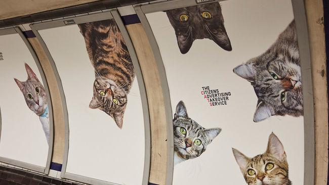 Esta estación de metro ha sustituido todos sus anuncios por gatos