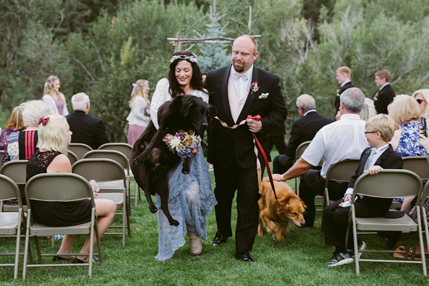 Este perro moribundo fue en brazos a la boda de su dueña porque no se la quería perder