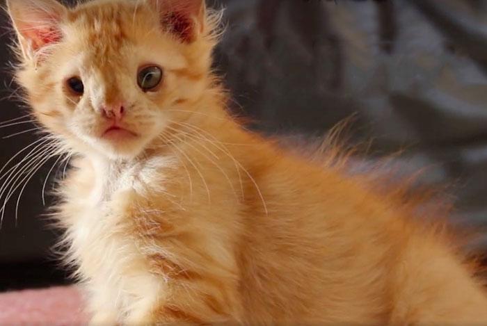 """A este gato lo abandonaron por ser """"demasiado feo"""". Ahora, ya tiene un hogar"""