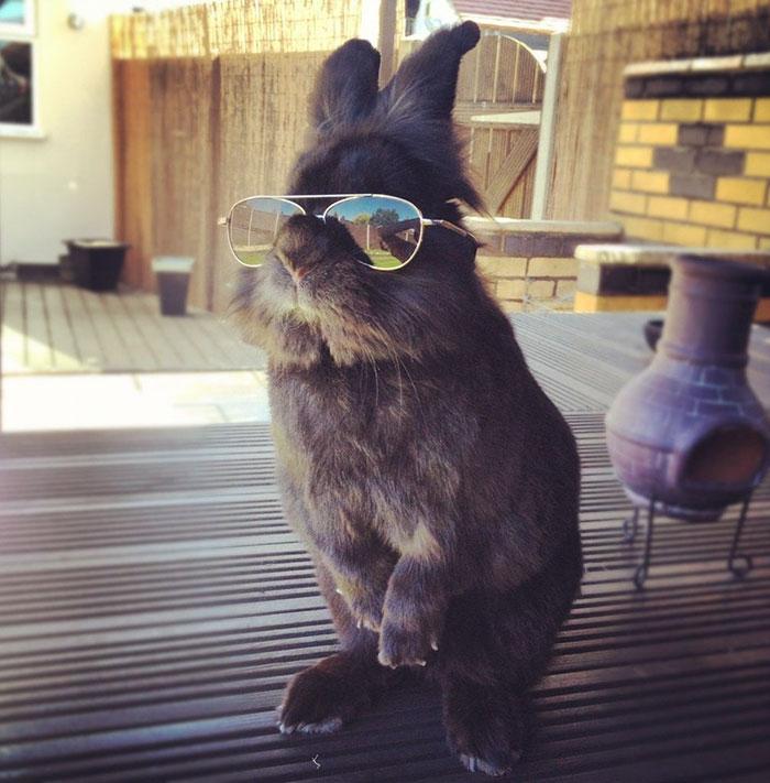 meme conejo gafas de sol