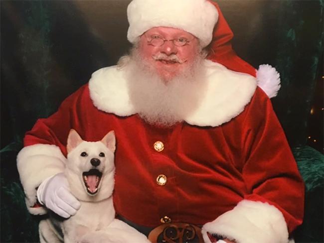 perra se hace una foto con papa noel