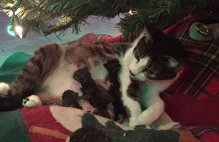 Esta gata rescatada dio a luz bajo un árbol de Navidad y los conmovió a todos