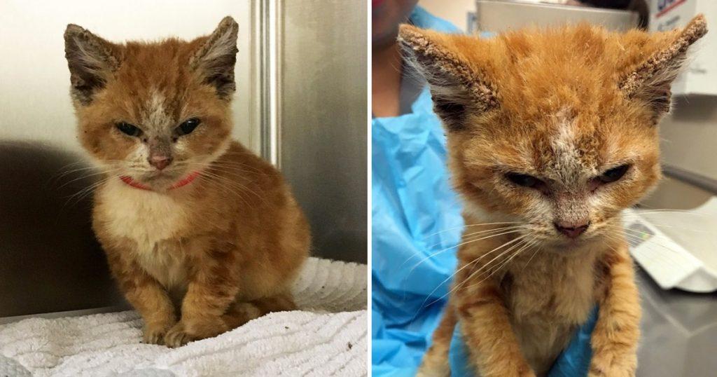 Esta gata gruñona cambió completamente cuando descubrieron lo que le pasaba