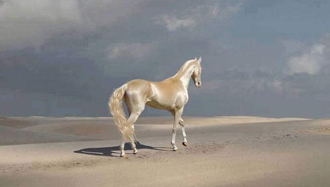 Su pelaje parece metálico y es considerado el caballo más bonito del mundo