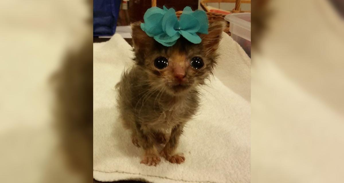 Conoce a la gatita más pequeña (y adorable) del mundo