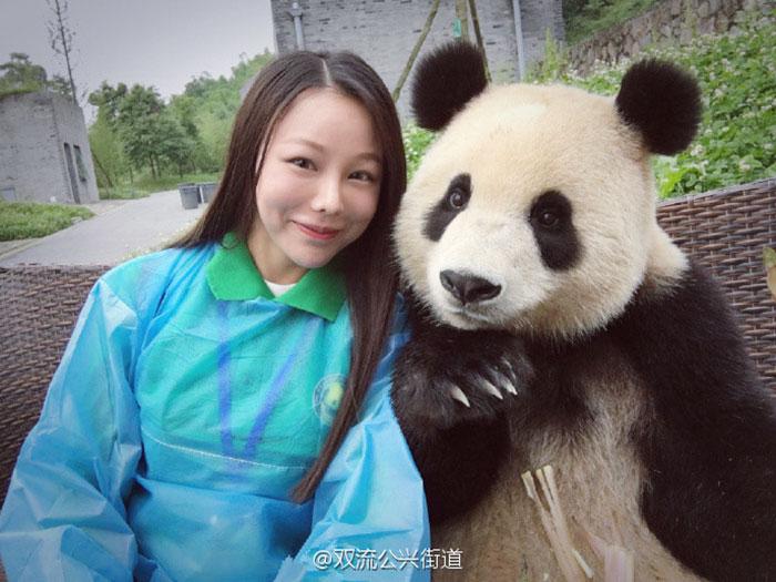 panda posando para selfies